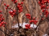 3018-snow-filled-nest