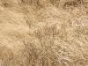 3024-bog-grasses