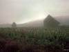 2006-gladiola-dawn