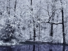 4017-snow-etched-trees-exton-pa