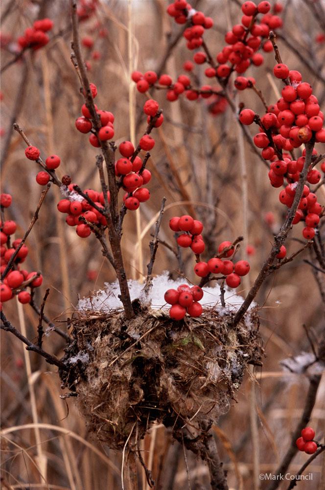 3018 snow filled nest